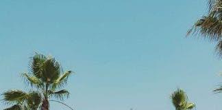 Max Beach 3