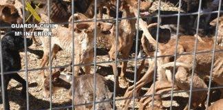 2020 08 18 Maltrato Animal Toledo 01