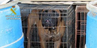 Dogs Caged And Kept In Shocking State At Farm Kennels In Spain S Murcia Region