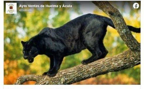 Black Panther Warning