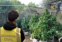 marijuana farm mallorca