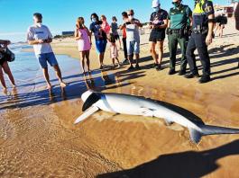Shark Guardamar