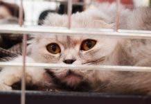 Shelter Cat 2754333_1920