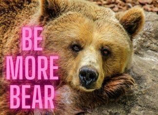 Be More Bear