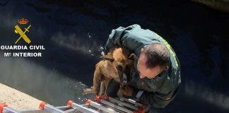 Double Doggy Rescue As Animals Get Stuck In A Ditch In Spain S Murcia Region