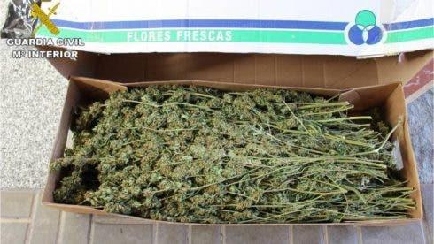 Alicante Drugs In Plants