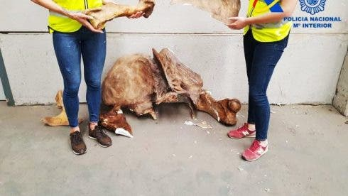 Fossil find Valencia