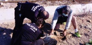 Deer Rescue In San Fulgencio