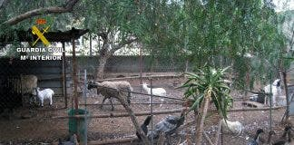Hundreds Of Mistreated Animals Rescued From Illegal Zoo In Spain S Murcia Region