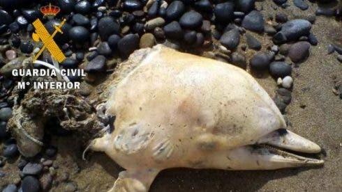 Beheaded Dolphin 1