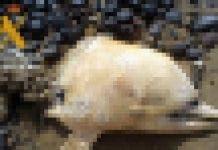 Dolphine Pixel