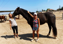 Easy Horse Care Rescue Centre