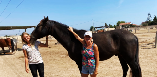Easy Horse Care Rescue Centre