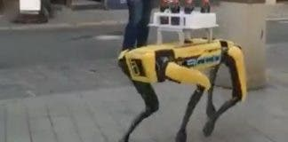 Robot Server Dog