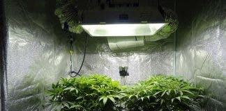 Weed Tent Room