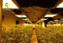 Russian Man Caught Running A Giant Marijuana Farm In His Villa Basement On Spain S Costa Blanca
