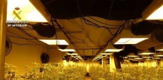 Russian Man Caught Running A Giant Marijuana Farm In His Villa Basement On Spain S Costa Blanca