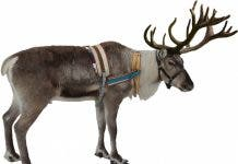 Isolated_white_reindeer_winter_christmas_deer_xmas_holiday 671267
