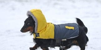 Dogs have a higher tolerance for the cold than humans... but up to a limit