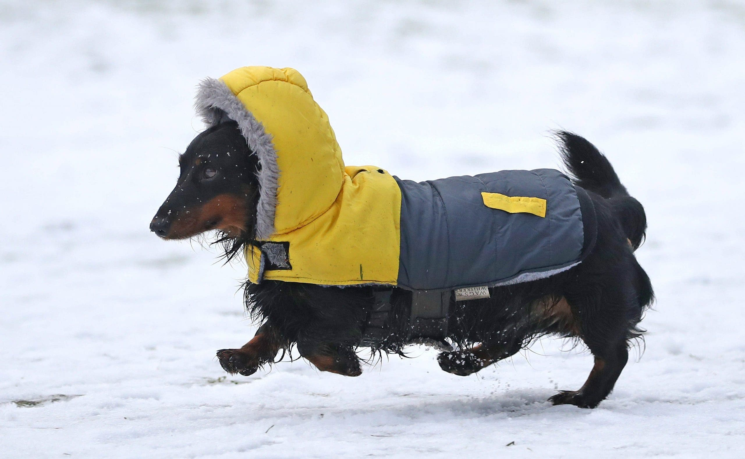 Dogs have a higher tolerance for the cold... but up to a limit