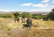 Guardias Civiles Malaga Rescate Animales
