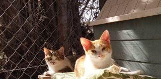 San Fulgencio Cats