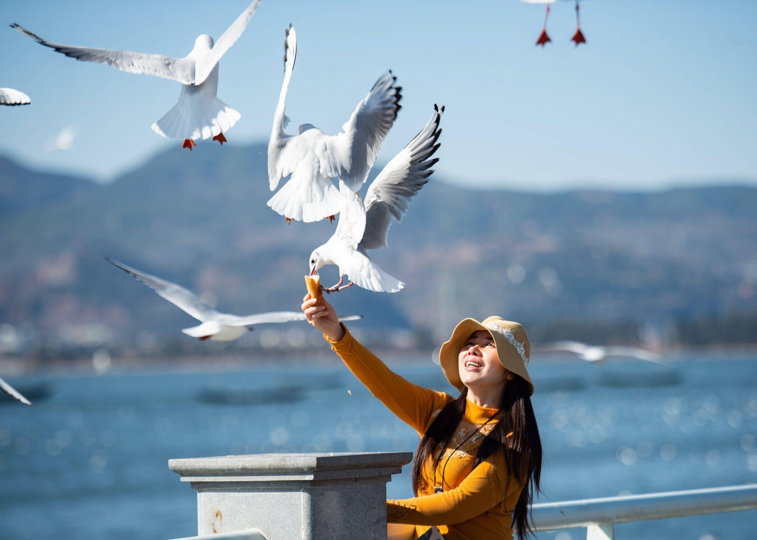 Tourism seagulls