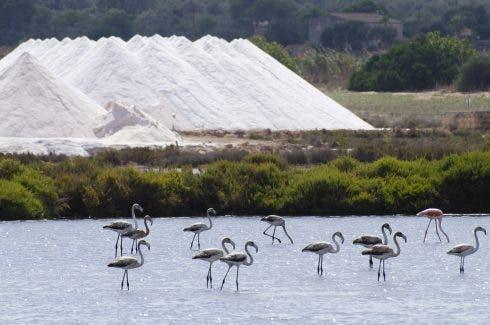Salines Des Trenc Flamingos T3