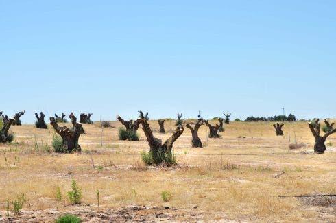 Chopped Trees Los Aires Farm