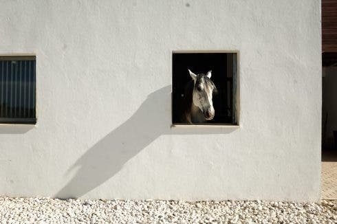 Lacuadra Ronda Horse Stables Dsc1552 1030x686 1