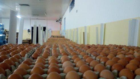 Illegal Eggs