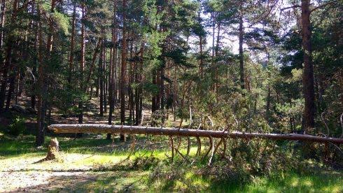 55 Bosque En Orea