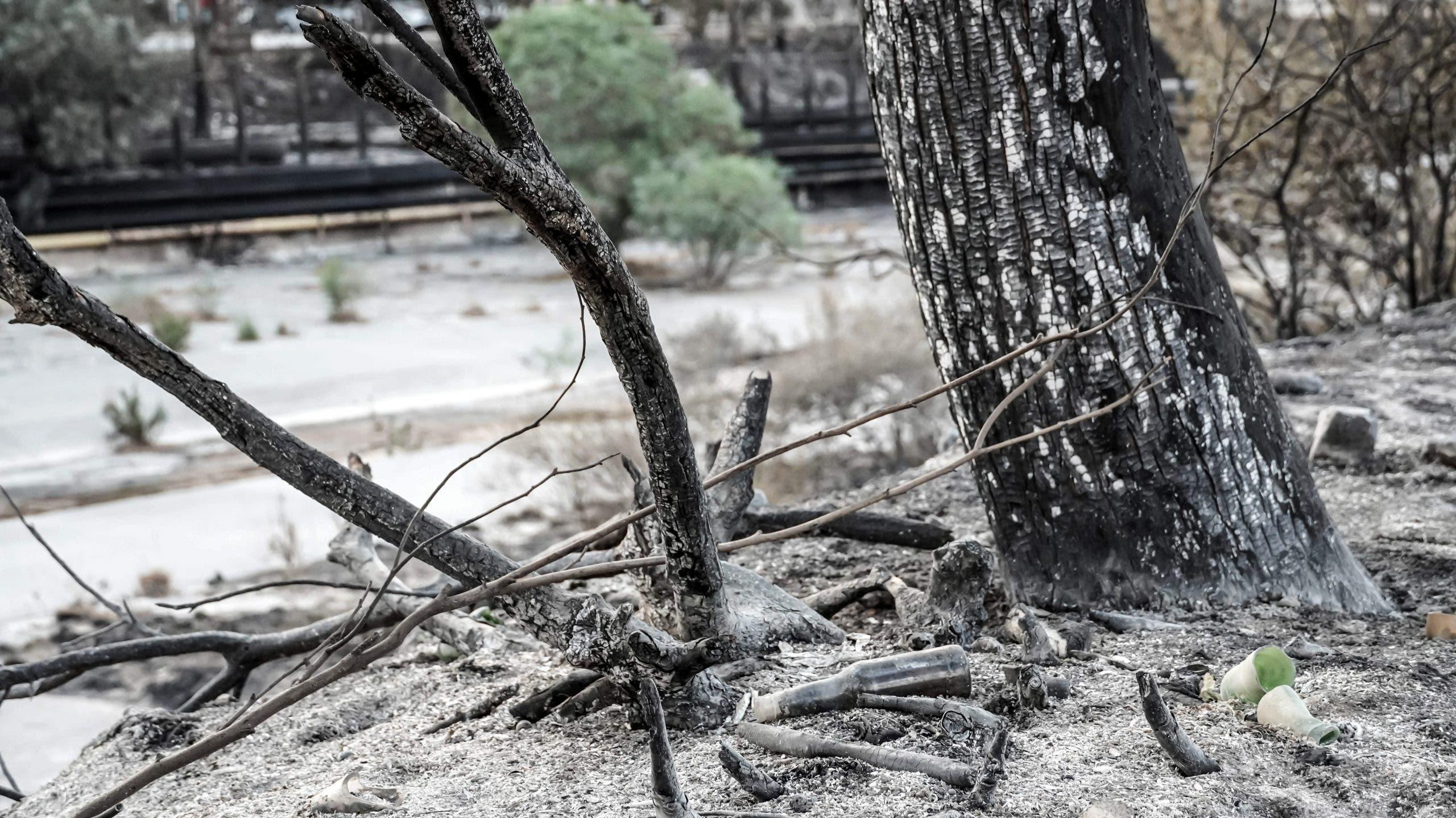 Turkey: Wildfires In Milas