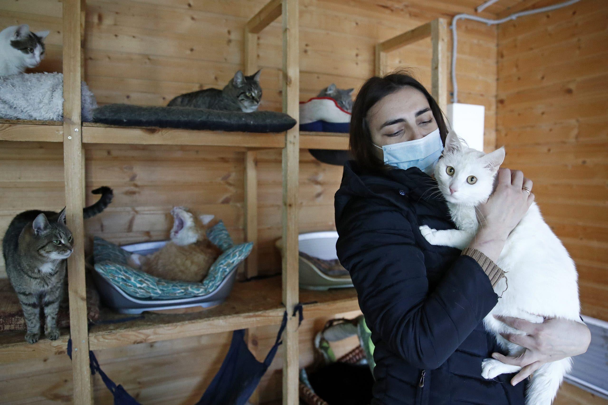 Refugio Para Animales En Rusia Que Recoge A Estos De La Calle Durante La Pandemia De Coronavirus