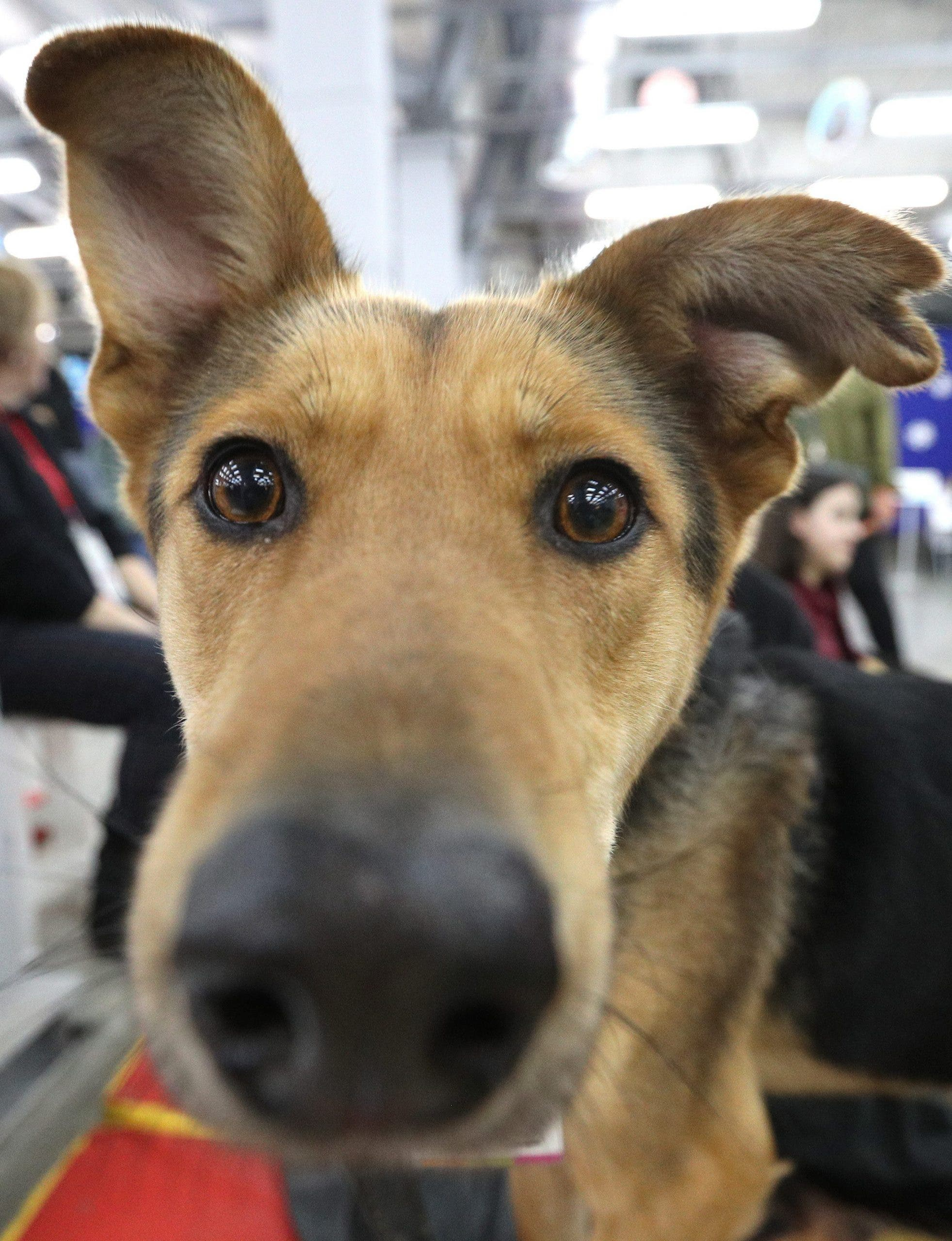 Russia: Charity Festival Helping Stray Dogs And Cats In Moscow