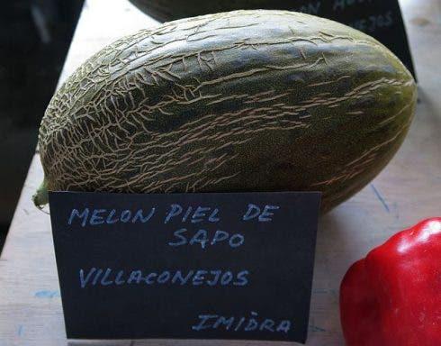 Cucumis Melo, Melón Piel De Sapo , Villaconejos