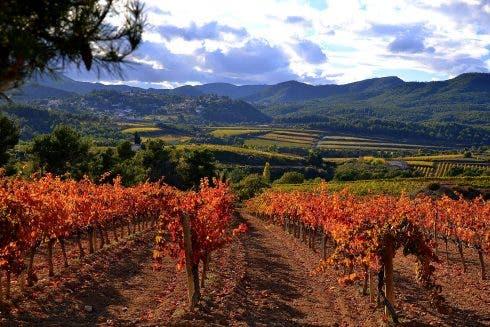 Vinyes De Tardor, Santa Maria De Foix, Alt Penedès. (22366284159)