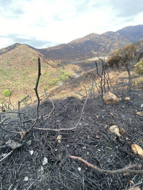 Casares Fire