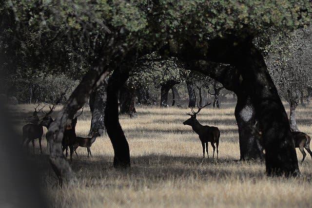 640px Sierra De Andújar (4)
