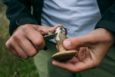 Man Clean Fresh Wild Picked Mushrooms
